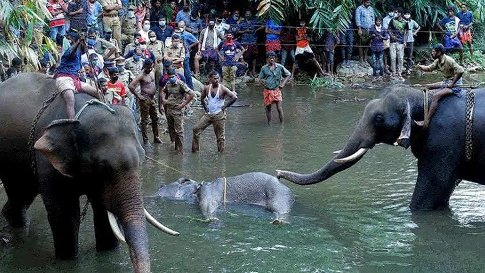 The Killing Of The Elephant In Kerala: Inhuman, Barbaric But Not Communal