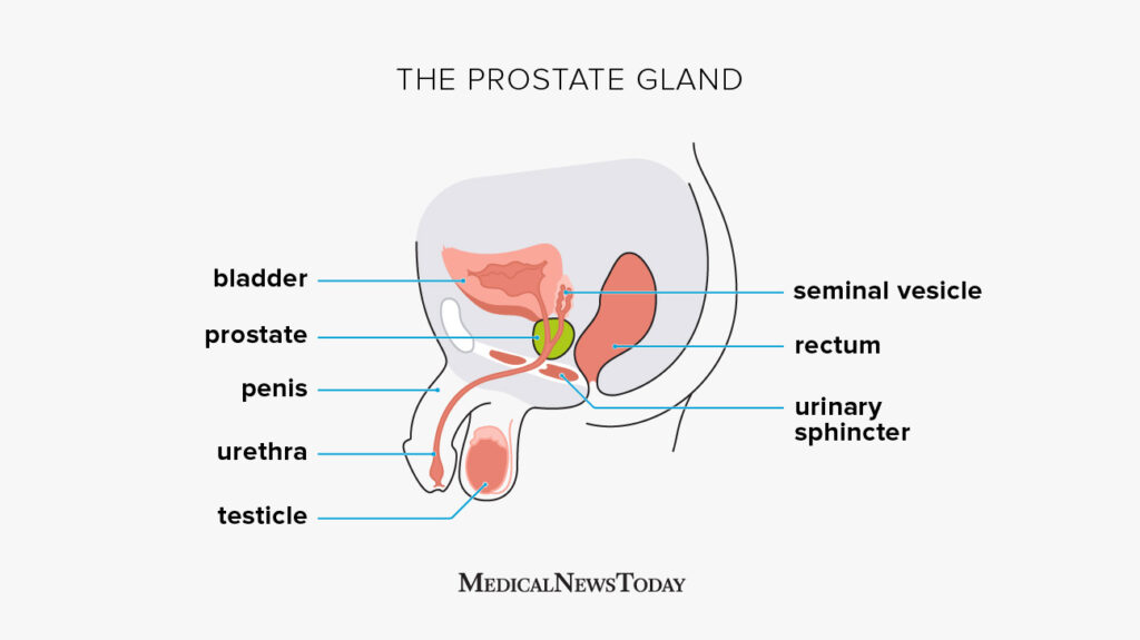 Men: Advancing Age And The Prostate Gland